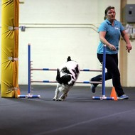 Shannon Boeset : Obedience Instructor
